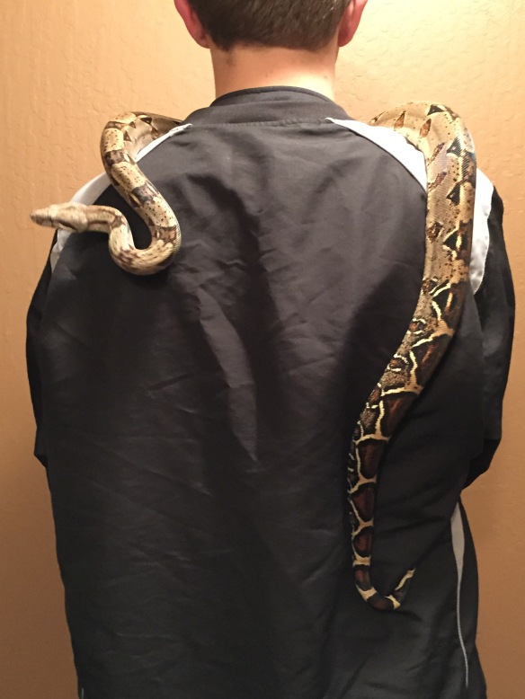 When you realize the kid is over 6' tall, you get a sense for how bigt this snake is (and he's not done growing)
