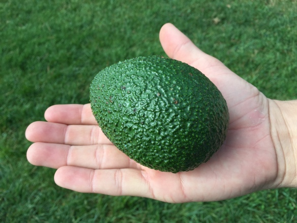Teen declared this the greenest avocado he's ever seen
