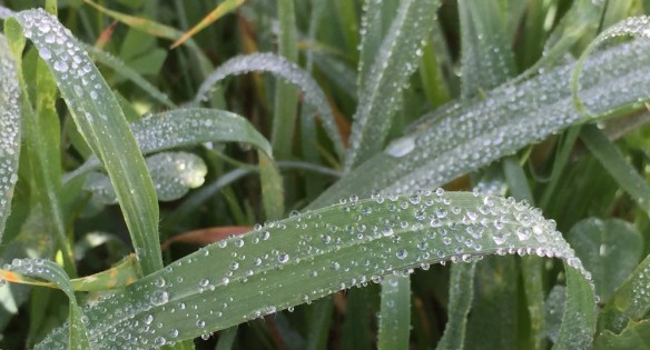 cropped-dewy-grass.jpg