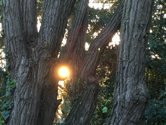 The sun through the trees caught my eye. Our backyard isn't Middle Earth, but in this picture, the trees remind me of Ents.