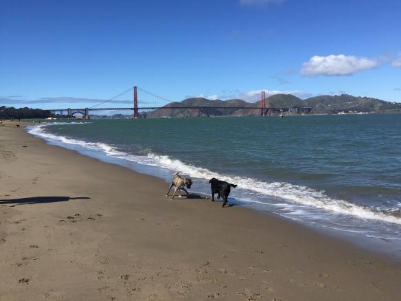 Happy beach dogs