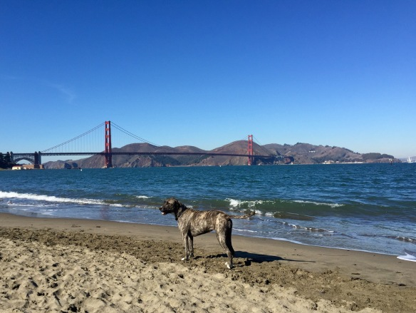 SF dog