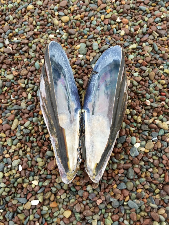 marin shell