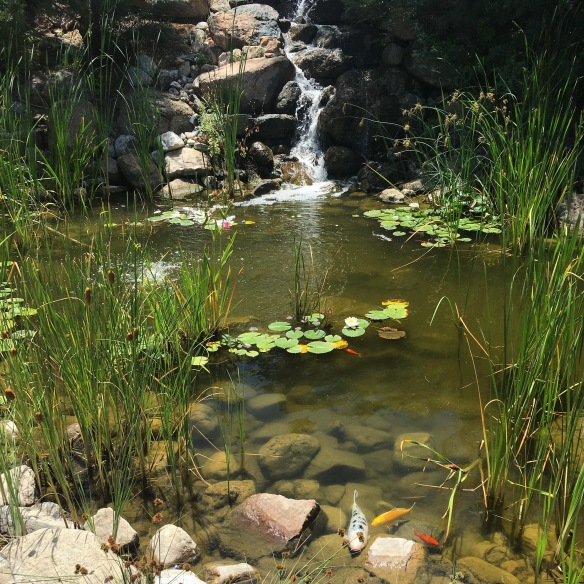 Koi pond at St. John's College, Santa Fe, NM