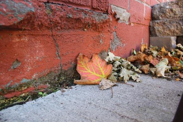 fstephens-leaf